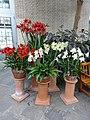 Garden Court - US Botanic Gardens 24.jpg