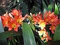 Gardenology-IMG 4990 hunt10mar.jpg