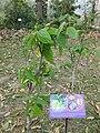 Gardenology.org-IMG 7275 qsbg11mar.jpg