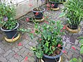 Gardenology.org-IMG 7741 qsbg11mar.jpg