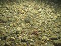 Gastropoda WBRF CEND0313 MP09 STN 10 A1 006.jpg