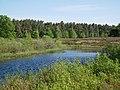 Gewässer an der Behringer Heide I.jpg
