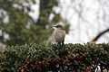 Gfp-bird-sitting-on-tree.jpg