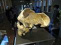 Gibraltar Skull (2).JPG