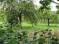 Glasshouse Orchard - geograph.org.uk - 549355.jpg
