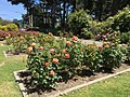 Golden Gate Park Rose Garden 5 2016-06-29.jpg