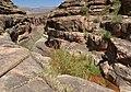 Grand Canyon National Park California Condor 87 3512 (5735144417).jpg