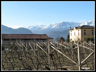 Trento DOC - Vineyard in Trento