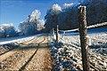 Grauholz - panoramio.jpg