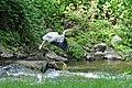 Graureiher am Rotbach 03.jpg