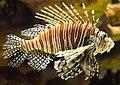 Greater Cleveland Aquarium (18978495623).jpg