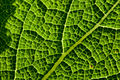 Green Planet (4162107831).jpg