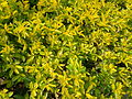 Green yellow leaves.jpeg