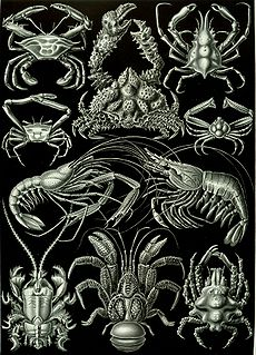 Decapoda Order of crustaceans