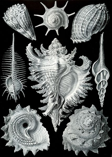 自然界的艺术形态插画 - 海阔山遥 - .