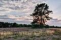 Haltern am See, Westruper Heide -- 2015 -- 7980-4.jpg