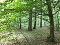 Hambacher Wald 2018 - Caroline Dormans.jpg