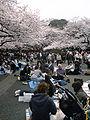 Hanami Ueno 2008-3-27.jpg