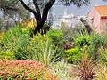 Harbour from Gibraltar Botanic Gardens.jpg