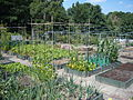 Hartley lane allotment garden 2088.jpg