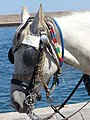 Head of carriage horse in Chania, Creta 05.jpg