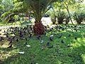 Heatwave pigeons.jpg