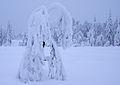Heavy snow - 1 (3261000420).jpg