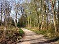 Hermes (60), chemin forestier de Froidmont - GR 124 1.jpg