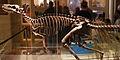 Herrerasaurus at the CMNH 1.jpg