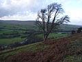 Hillside above Williamston - geograph.org.uk - 287233.jpg