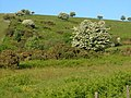 Hillside at Blackaton - geograph.org.uk - 183887.jpg
