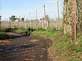 Hop field from Pedding Lane - geograph.org.uk - 628912.jpg
