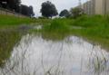 Humedal Madre de Agua.png