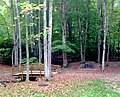 Hungry Mother State Park Picnic Area (15185677406).jpg