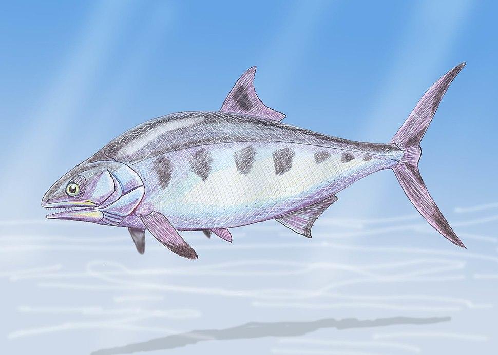 Hypsocormus2