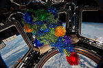 ISS-46 Christmas Tree in Cupola module.jpg