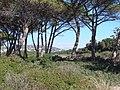 Ile Sainte Marguerite - panoramio.jpg