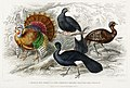 Illustration from A History of the Earth and Animated Nature by Oliver Goldsmith from rawpixel's own original edition of the publication 00057.jpg