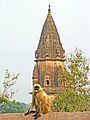 India-5944 - Flickr - archer10 (Dennis).jpg