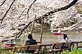 Inokashira Park 2009-04-05 (3446857732).jpg