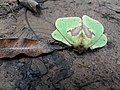 Insect 20180912 115656.jpg