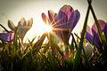 Into the sun (13044240813).jpg