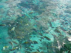 Isla Mujeres (9).jpg