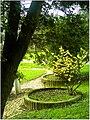January Frost Botanic Garden Freiburg blühende China Zaubernuß - Master Botany Photography 2014 Gen Laboratories - Mao said, push the cat - panoramio.jpg
