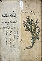 Japanese Herbal, 17th century Wellcome L0030096.jpg