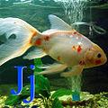 Japon balığı için J.jpg
