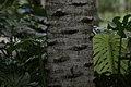 Jardim Botânico do Rio de Janeiro - 130716-7251-jikatu (9333174103).jpg