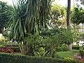 Jardin de San Juan de Dios - panoramio.jpg