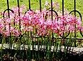 Jardin de mi Tio (3556152732).jpg