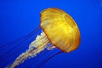 Jelly cc11.jpg